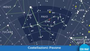 pavone_evidenza